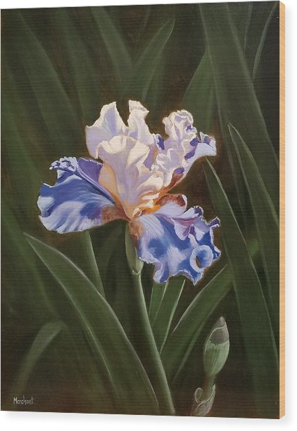 Purple And White Iris Wood Print