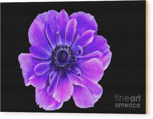 Purple Anemone Flower Wood Print