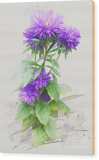 Purple Aster Wood Print