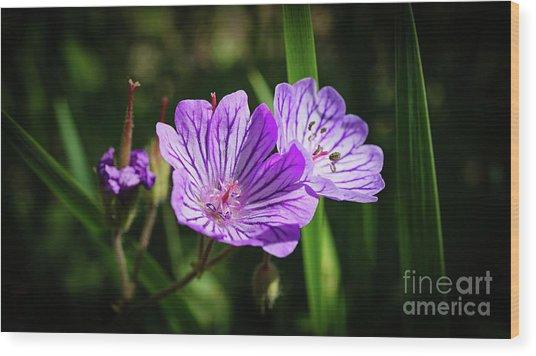 Purple Attraction Wood Print