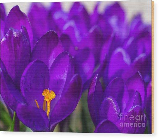 Purple Beauty Wood Print