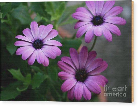 Purple Beauty Wood Print by Valia Bradshaw