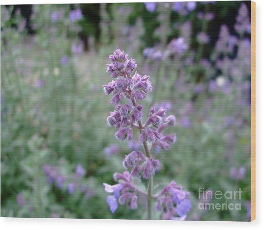 Purple Cat Mint Wood Print