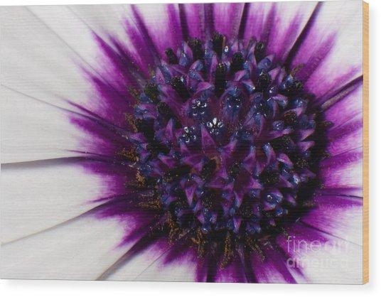 Purple Color Burst Wood Print