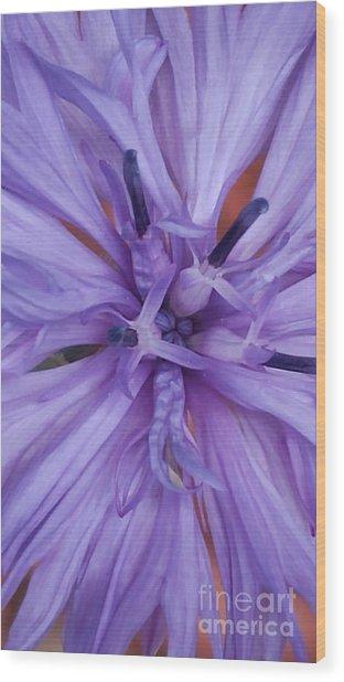Purple Colorado Wildflower In Macro Wood Print