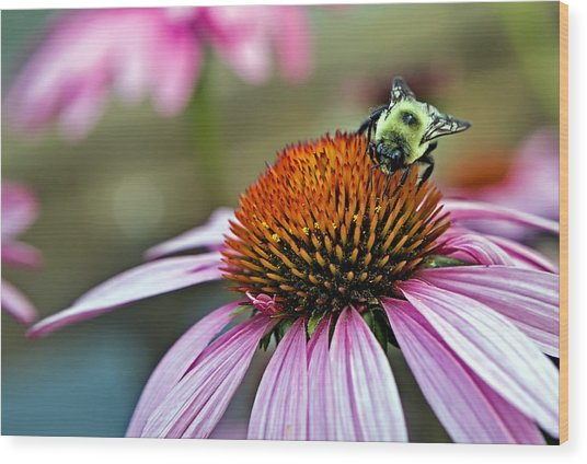 Purple Cone Flower And Bee Wood Print