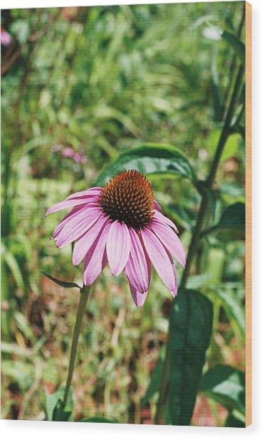 Purple Coneflower Wood Print by Cheryl Martin