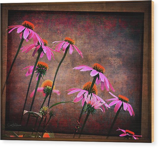 Purple Coneflowers Out Of Alignment  Wood Print