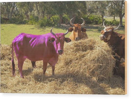 Purple Cow Wood Print