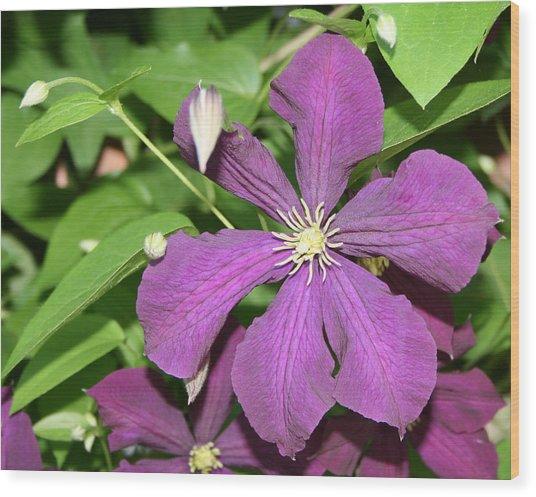 Purple Delite Wood Print