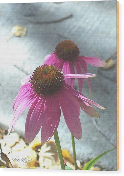 Purple Echinacea Wood Print