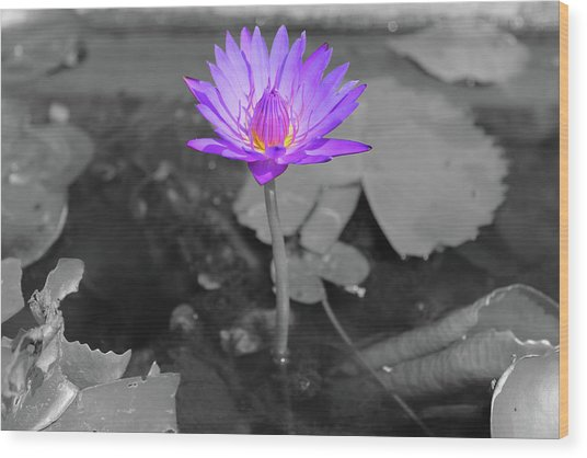 Purple Enlightened Lotus Wood Print