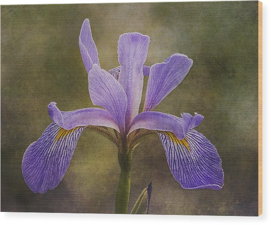 Wood Print featuring the photograph Purple Flag Iris by Patti Deters