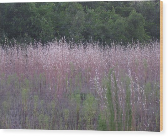 Purple Florida Grass Horizontal Wood Print