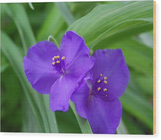 Purple Flower Wood Print by Audrey Venute