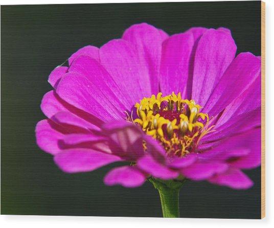 Purple Flower Close Up Wood Print by Edward Myers