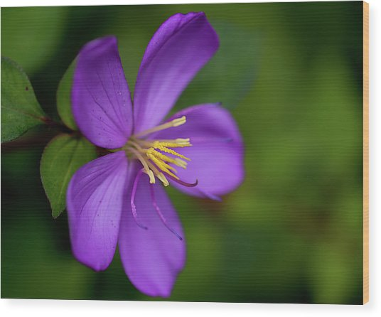 Purple Flower Macro Wood Print