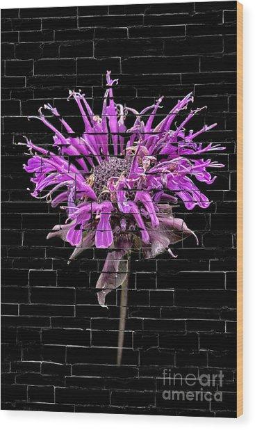 Purple Flower Under Bricks Wood Print