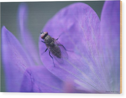 Purple Fly Wood Print