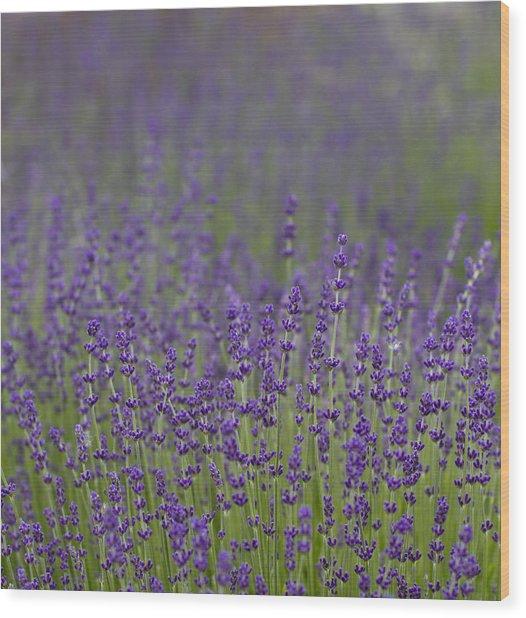 Purple Haze Wood Print