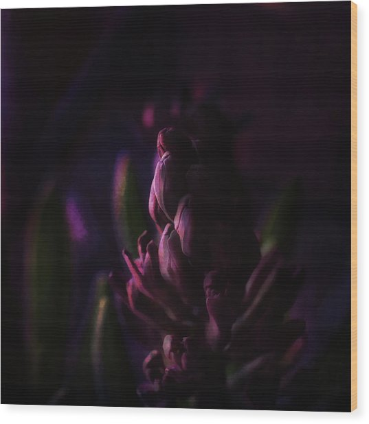 Purple Hyacinth Sunset Wood Print