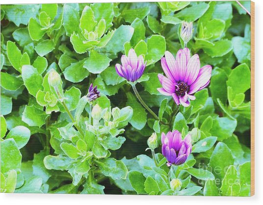 Purple In Greenery Wood Print