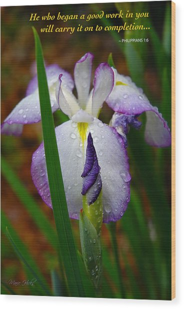 Purple Iris In Morning Dew Wood Print