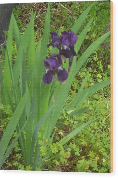 Purple Iris With Green Leaves Wood Print by Sharon McKeegan