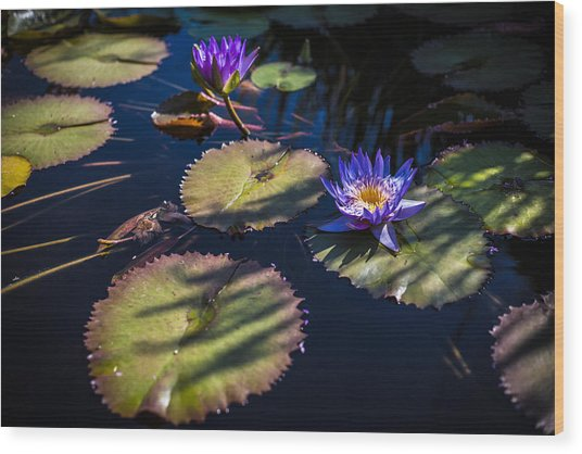 Purple Lily Wood Print