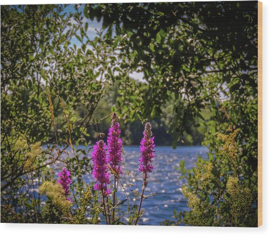 Wood Print featuring the photograph Purple Loosestrife In The Irish Countryside by James Truett
