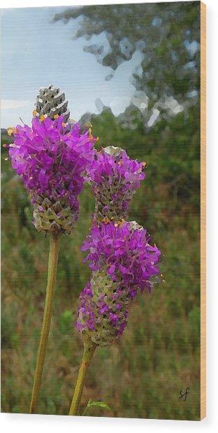 Purple Prairie Clover Wood Print