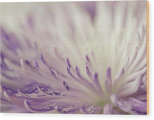 Purple Spider Mum Macro Wood Print