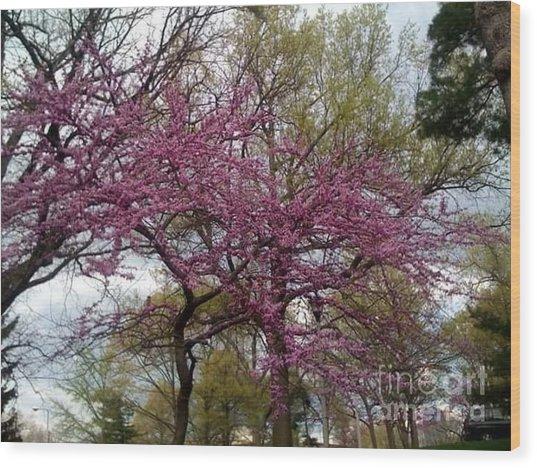 Purple Spring Trees Wood Print