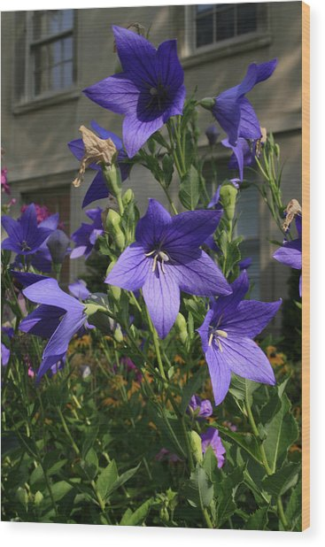 Purple Stars Wood Print by Alan Rutherford