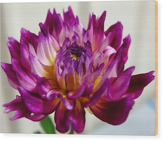 Wood Print featuring the photograph Purple Sunset Flower 1 by Marianne Dow