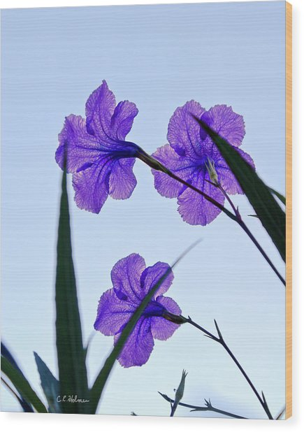 Purple Trio Wood Print