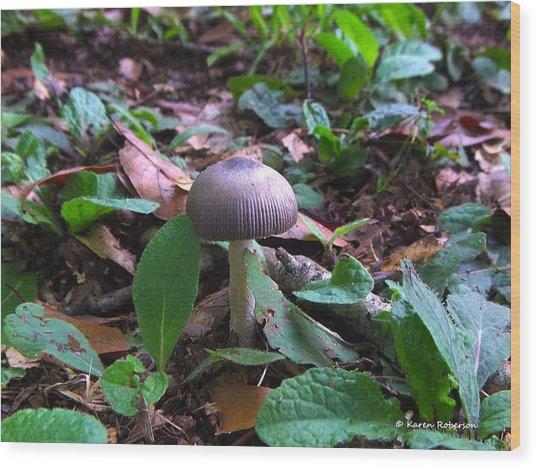 Purple Umbrella Mushroom Wood Print by Karen Roberson