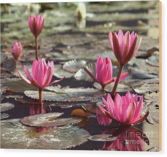 Purple Water Lillies Wood Print