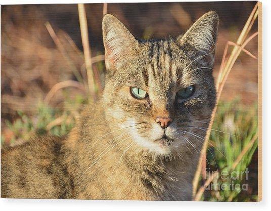 Purr-fect Kitty Cat Friend Wood Print