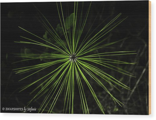 Pyrotechnics Or Pine Needles Wood Print