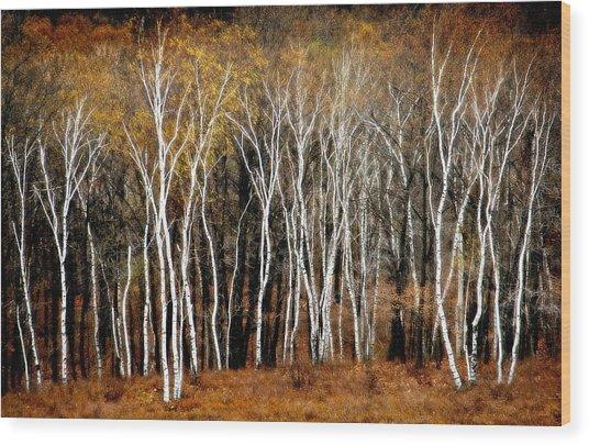 Quabbin Birches Wood Print by Richard Danek