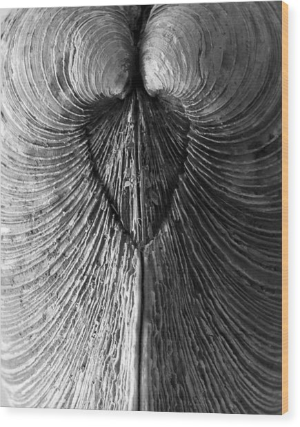 Quahog Closeup No.1 Wood Print by Henry Krauzyk