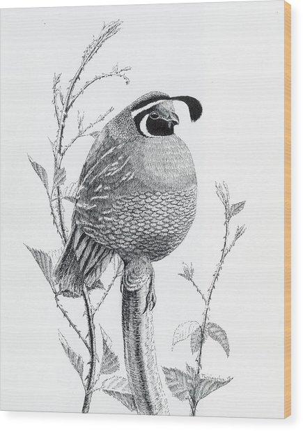 Quail Sentry Wood Print