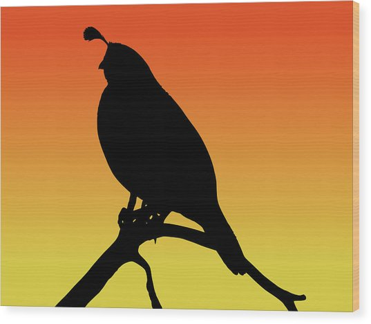 Quail Silhouette At Sunset Wood Print