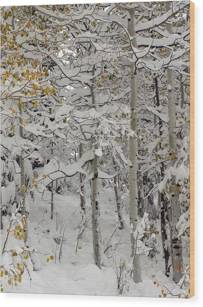 Quakies In Early Winter Wood Print