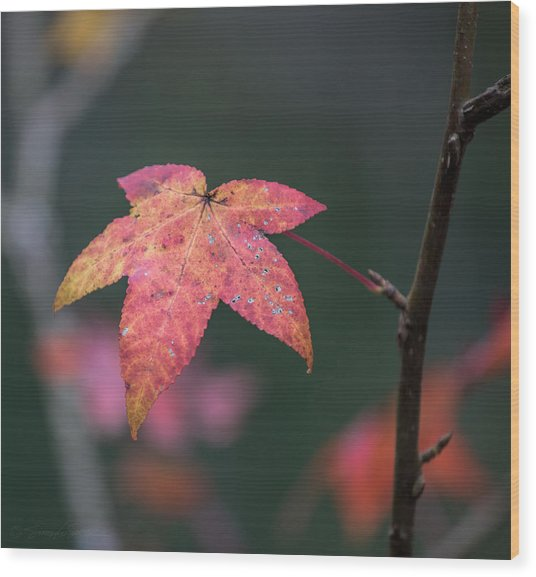 Quarry Leaf Wood Print