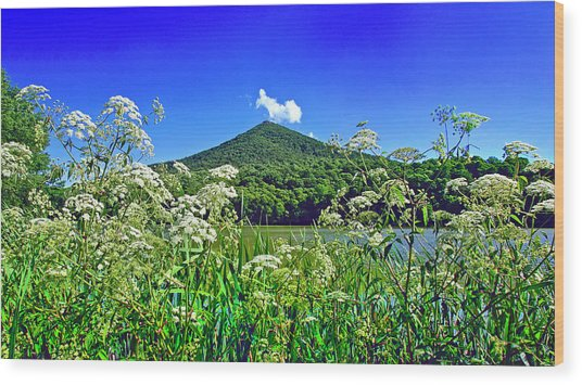 Queen Anne's Lace, Peaks Of Otter  Wood Print