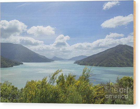 Queen Charlotte Sound, New Zealand Wood Print by Julia Hiebaum