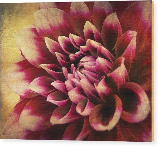 Queen Dahlia Wood Print