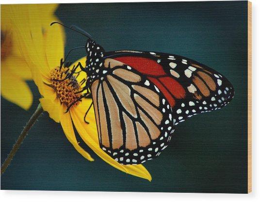 Queen Monarch 2 Wood Print